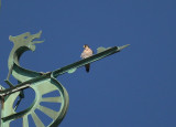 Peregrine: facing west on south pointing forespar of Viking boat weathervane