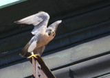 Peregrine: departing lift beam