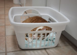 P5013457 Laundry