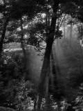 P8264410 Morning Haze