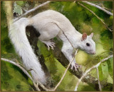 _MG_6242 Crazy Mixed Up Squirrel DAP Sargent Redone