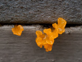 I Think It's Orange Witches Butter