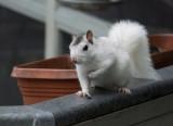 P1020246 Rainy Day Squirrel 3200