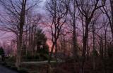 P1030334 Blush of Dawn With Singing Birds