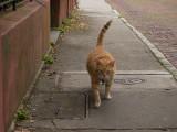 P1040384 Street Friend