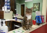 20120803_115255 Vet  Office Cat