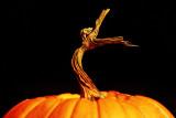 From Autumn's Vineyard