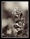 native bush flower
