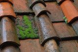 Mossy Tiles3570