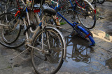 Neglected Bicycles3692