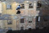Reflections on Piazza di Madonna degli Aldobrandini3693