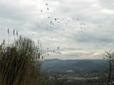 A flock of pigeons2344