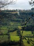 Beautiful fields2350