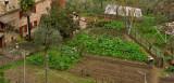 A little farm2369-70