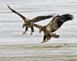 Twin Landing