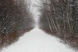 Trail into winter