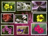 Spring Flower Macros.jpg