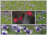 Macro Garden.jpg