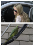 Two Birds in the City.jpg