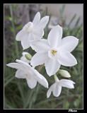 White Macro.jpg