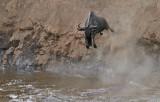 Jumping the Mara!