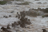 Carnage crossing the Mara