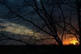 Sunrise through the tree 2