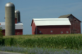Summer Crop and Barn w flowers