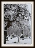 A Quiet Snow