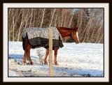 The Zebra Coat