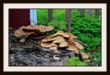 On The Stump