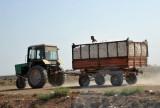 Cotton harvest season