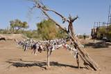 Sacred saxaul tree with cloth prayer strips