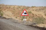Caution - Camels