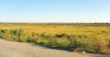 Flat plains of western Uzbekistan on the road to the Turkmenistan border at Dashoguz