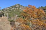 Fall foliage on the mountain track to Mylikouri