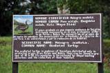 Wildlife information - Ocellated Turkey
