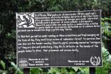 Wildlife information - Spider Monkeys (Mono araña)