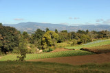 Agriculture in the Guatemalan highlands along the Panamericana