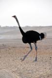 Abu Dhabi Mar12 0273.jpg