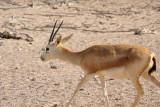 Abu Dhabi Mar12 0538.jpg