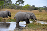 Elephants in the Khwai River, the boundary to the Moremi Game Reserve