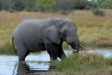 BotswanaJun12 0090.jpg