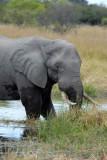 BotswanaJun12 0093.jpg