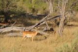BotswanaJun12 0320.jpg
