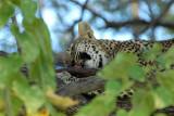 BotswanaJun12 0350.jpg