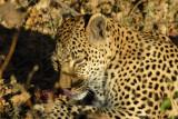 BotswanaJun12 0354.jpg