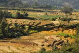 Terraced fields as the Prithvi Highway begins its long descent from Kathmandu