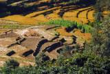 Terraced fields, Nepal
