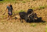 Plow team, Nepal